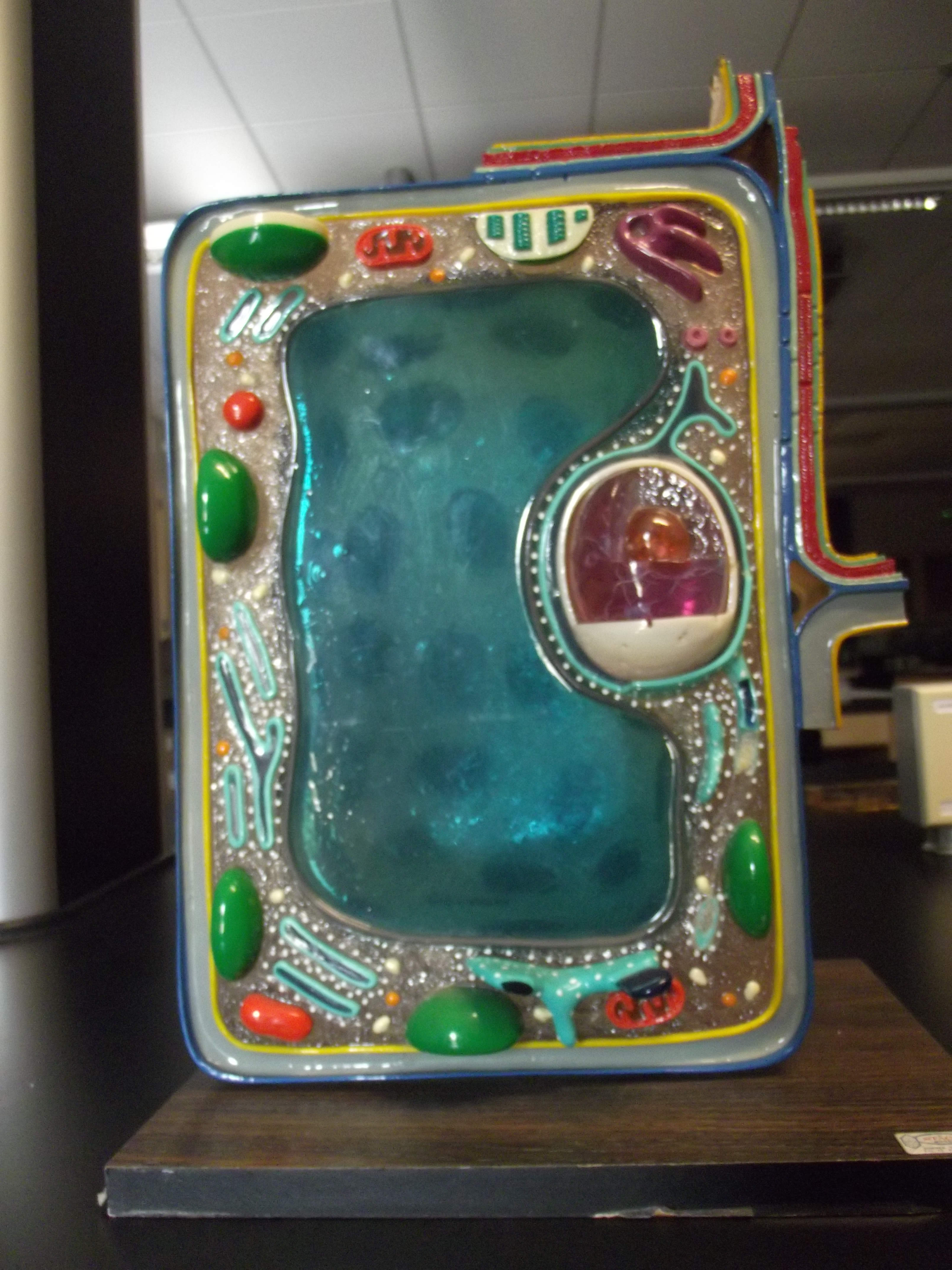 Plant cell 3d model wallpaper picture pictures to pin on pinterest