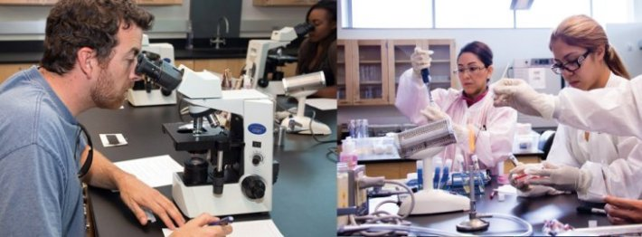 Students working in the laboratory