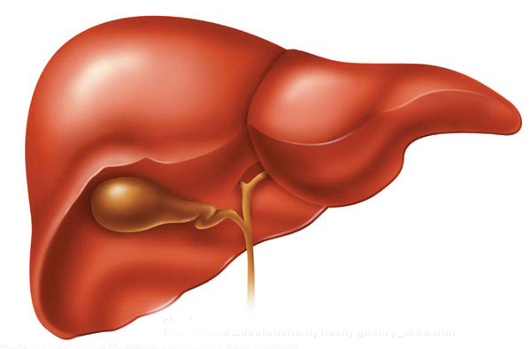... liver accumulates fat which can cause liver failure coma and death